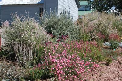summer blooms in Plant Select Garden